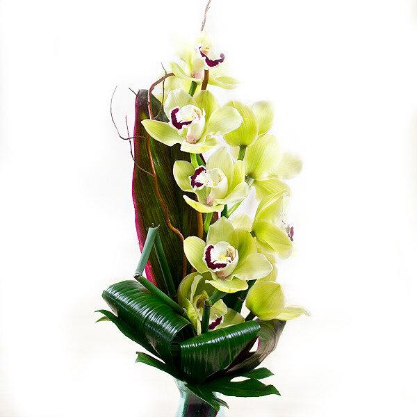 gelbe orchidee chocoblu. Black Bedroom Furniture Sets. Home Design Ideas